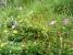 岩場の中に癒しのお花畑