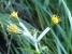 沢のほとりにチョウジギクが咲いていた.jpg