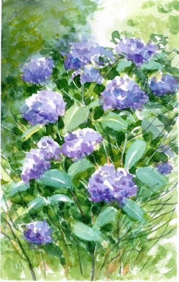 がんばれ紫陽花