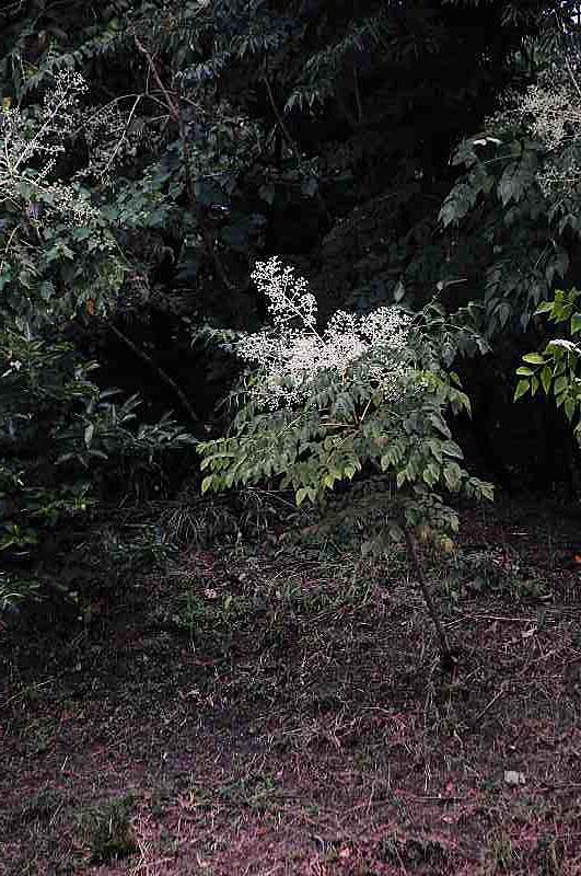 taranoki02