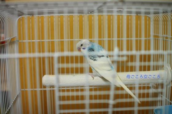 sIMG_0636-psuke.jpg