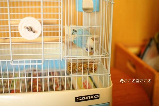 sIMG_0663-henshu.jpg