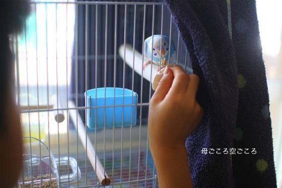 sIMG_0747-kokoro.jpg