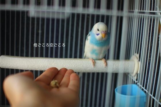 sIMG_0787-psuke.jpg