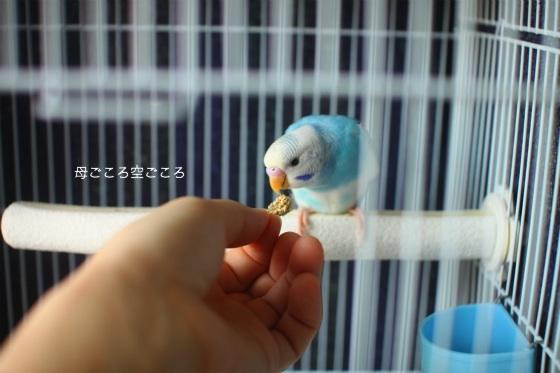 sIMG_0790-psuke.jpg