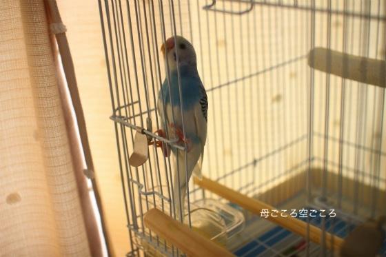 sIMG_0954-psuke.jpg
