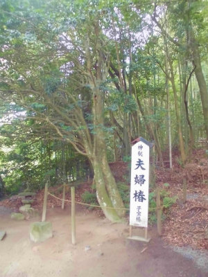 7.9八重垣神社10