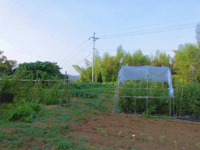 7.15朝の畑