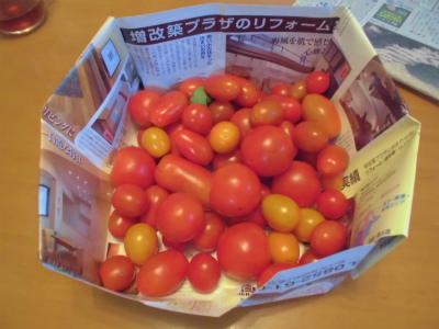7.17トマト収穫