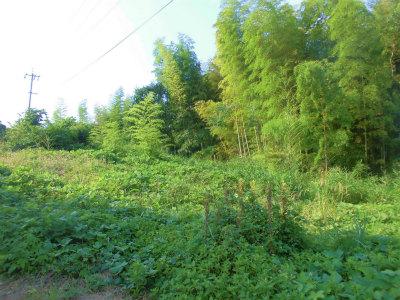 7.21隣の耕作放棄地