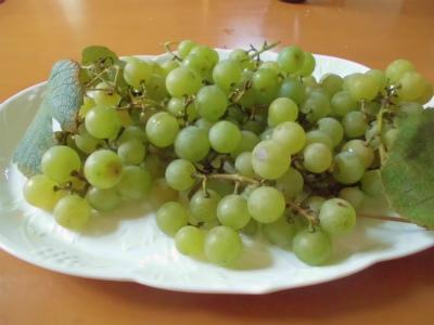 8.12初収穫のブドウ