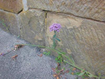8.23ど根性花