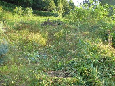 9.8空地の草刈り1