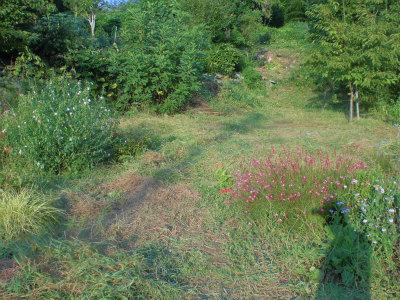 9.8空地の草刈り2