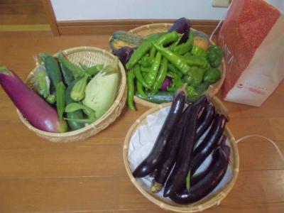 9.16収穫野菜