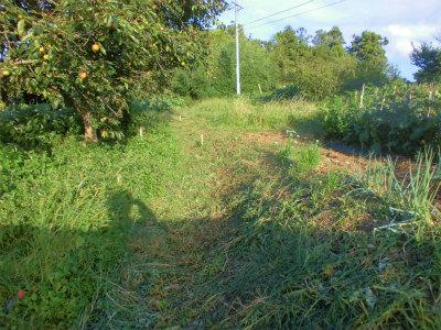 9.18草刈り3