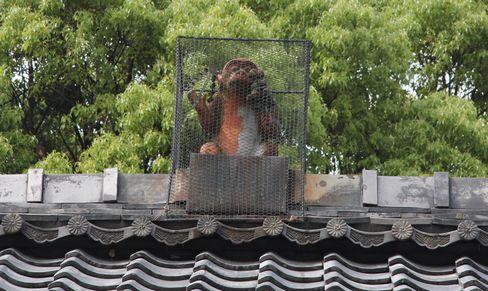 赤山禅院の猿_H26.06.26撮影
