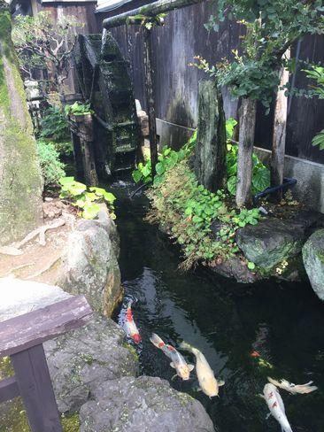 水車と錦鯉_H29.06.26撮影