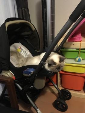 幸運を運ぶバーマン猫 〜 コウノトリ モモちゃん 〜