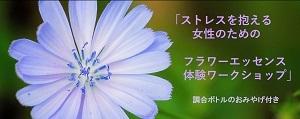 2体験WSPhoto_8月作成s