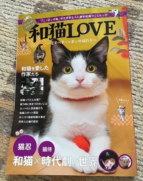 7月20日和猫LOVE