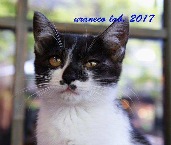 7月27日子猫
