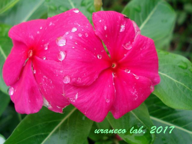 7月27日雨上がり2
