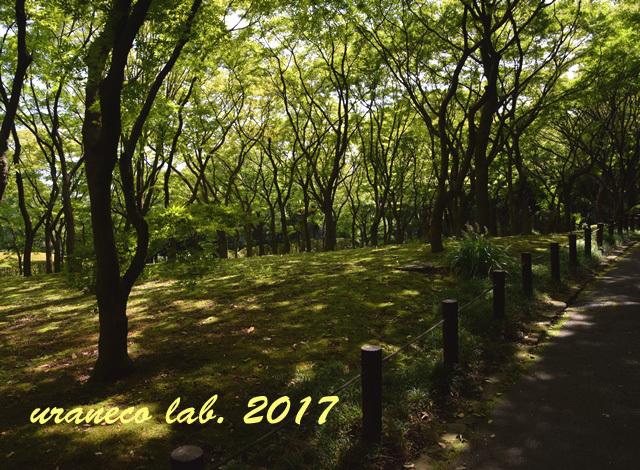 9月4日林の中へ2