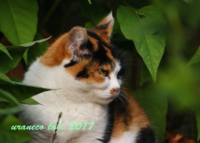 9月14日a cat in the green