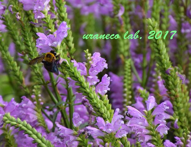 9月20日花と蜂3