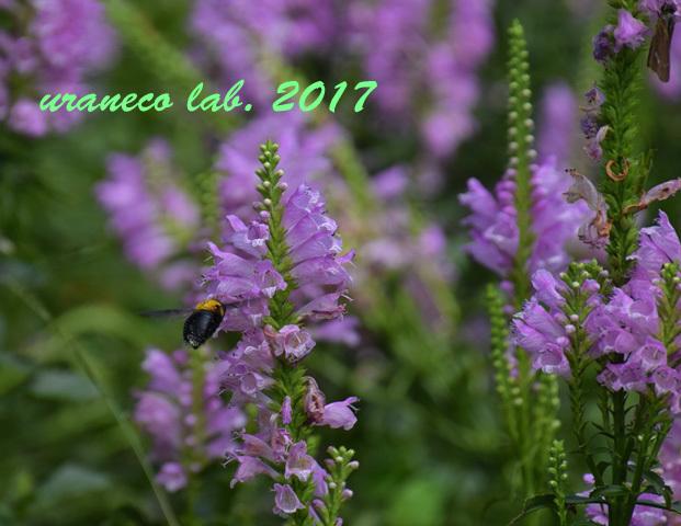 9月20日花と蜂2