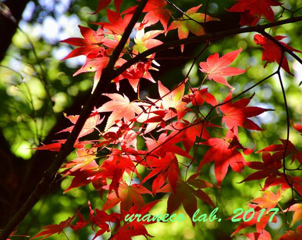 9月20日紅葉始まる3