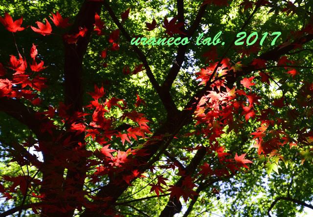 9月20日紅葉始まる2