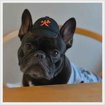 犬の野球チーム