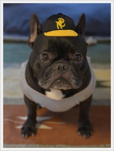 犬の野球チーム2