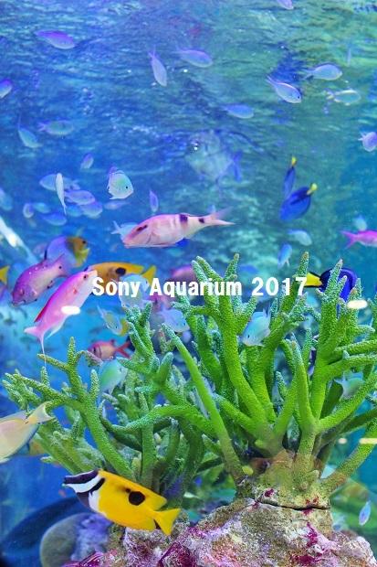 20170803Sony Aquarium 2017Ha