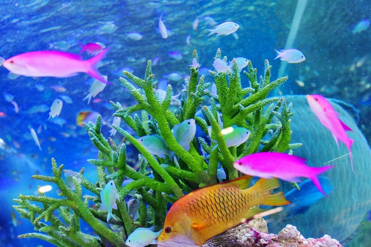 20170803Sony Aquarium 20174a