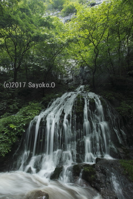 _F4A1159.jpg
