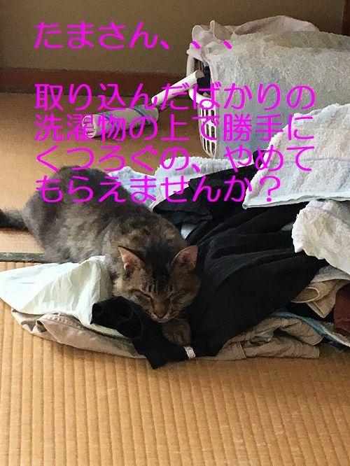 IMG_5744_20170729115234311.jpg