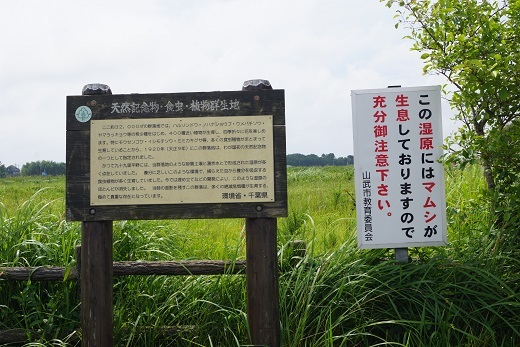 食虫植物群