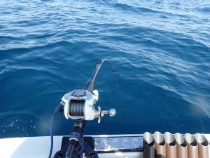 P9100014 ロッドも新調 メタリカ中深場