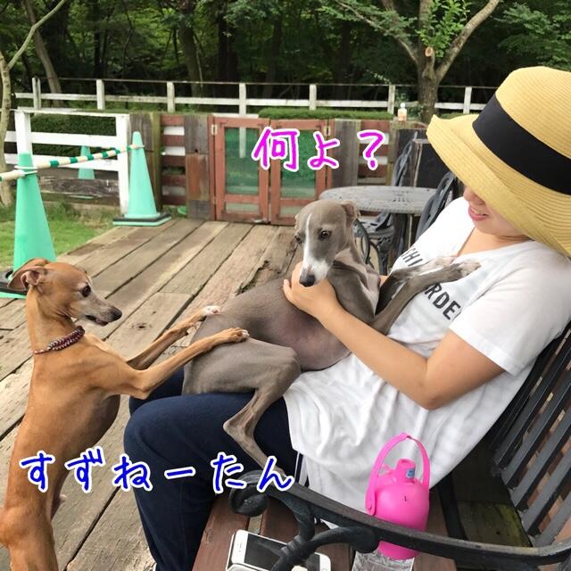 fc2blog_20170712222253abf.jpg