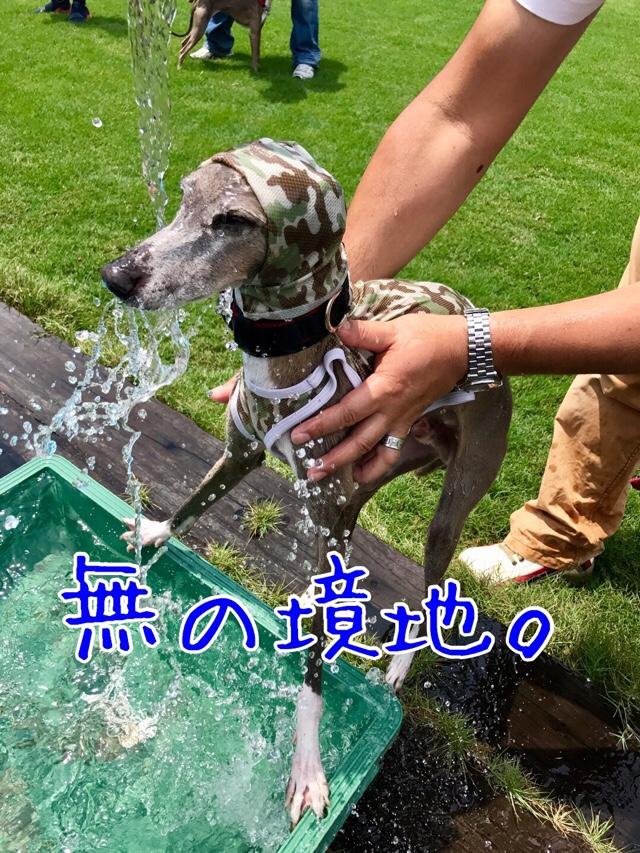 fc2blog_20170719074319167.jpg