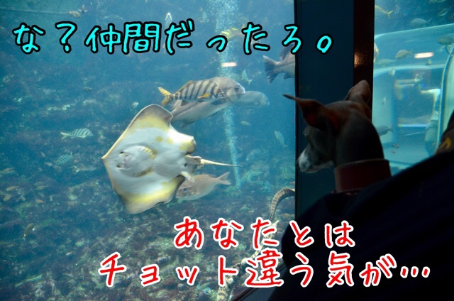 fc2blog_20170910024711f46.jpg
