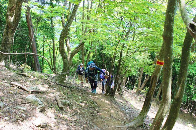 20170521竜ヶ岳06_640
