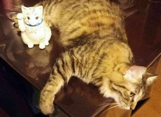 ヴィヴィちゃんと招き猫