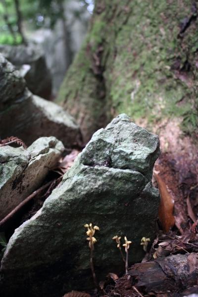 himeyagara17-024.jpg