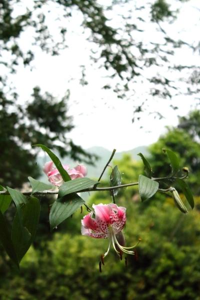 tainohama-002.jpg