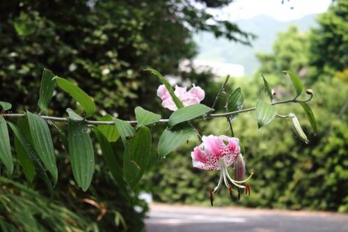 tainohama-003.jpg