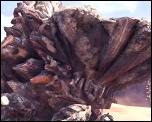 PS4:『モンスターハンター:ワールド』ボルボロスの登場や各種武器のアクションシーンが確認できる新トレイラーが公開